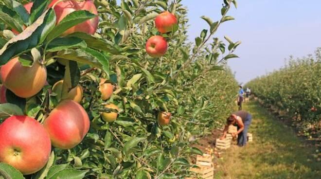 Agricoltura_Mele.jpg
