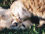 Animali_Cane_gatto_amici.jpg