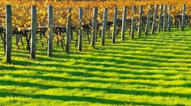 Agricoltura_Viti1.jpg