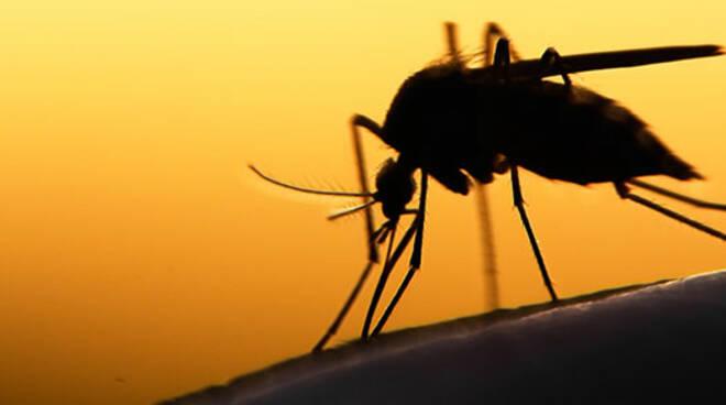 Caso di Dengue in zona Alfonsine: scatta intervento
