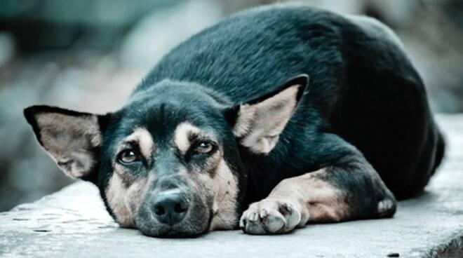 Nel 2014 nel canile di Ravenna sono entrati 230 cani e ne sono usciti 217