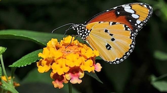 La Casa delle Farfalle è tra i luoghi dedicati di Cervia più apprezzati