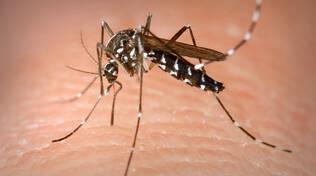 L'odiosa e temuta zanzara tigre