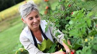 Due incontri sulla gestione biologica degli orti