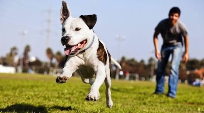 """Saranno premiati il miglior cane di razza, il miglior meticcio, il miglior """"taglia piccola"""""""