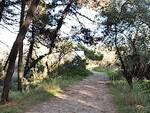 La pineta di Marina di Ravenna
