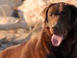 Uccidere animali domestici con esche avvelenate è un reato punito con la reclusione da quattro mesi a due anni