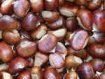 Marroni ovverosia castagne
