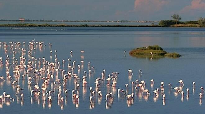 L'oasi dei fenicotteri rosa all'interno del Parco del Delta del Po