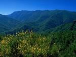 Alta valle del Bidente - Foto di Agostini