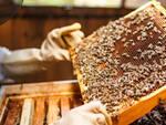 Al via a metà febbraio un corso di formazione in apicoltura e una serie di attività di sensibilizzazione verso le api