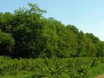 Il bosco ha al suo interno una maestosa fascia di farnie ed è un'area adatta ad attività didattico-ricreative