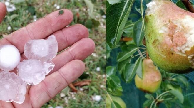 Alcune foto dei chicchi di grandine e dei danni provocati alla frutta