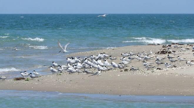 Riserva Naturale foce Bevano