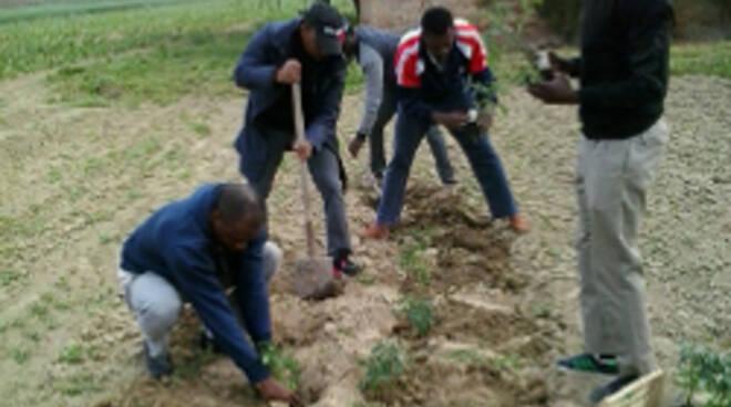 Migranti al lavoro nell'orto