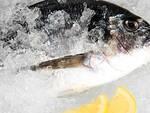 Protagonista il pesce delle nostre valli e dell'Adriatico