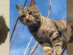 Alcuni gatti della Colonia felina Rifugio Piomboni
