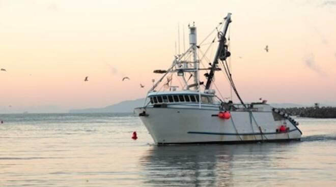 Una delle tante barche da pesca del porto di Rimini (foto d'archivio)