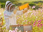 Un apicoltore intento nel suo lavoro