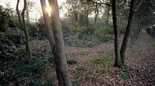 bosco del duca d'altemps