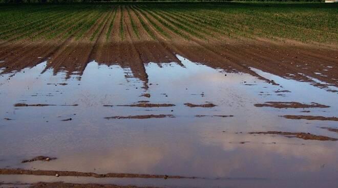 maltempo agricoltura