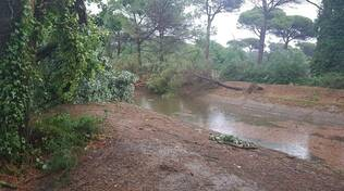 pineta milano marittima cervia - alberi caduti