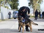 polizia e cani antidroga