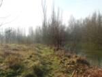 bosco di via Dalle Vacche