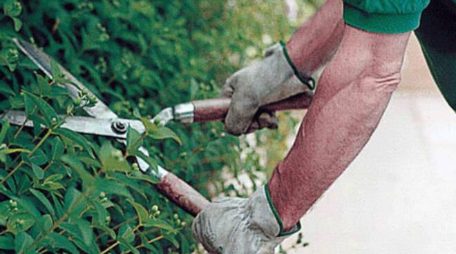 manutenzione parchi - verde