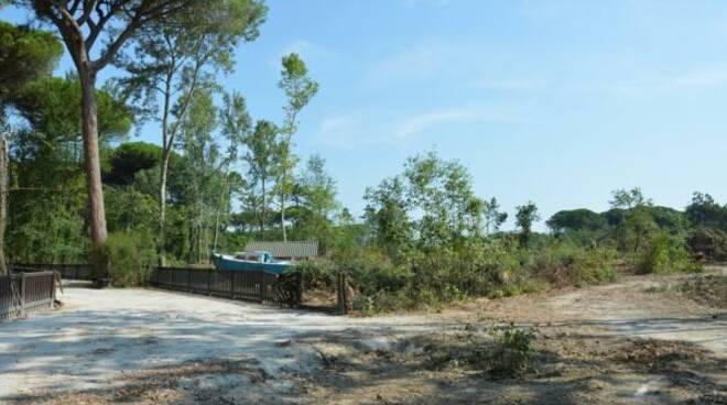 parco naturale di cervia a un mese dalla tromba d'aria di luglio 2019
