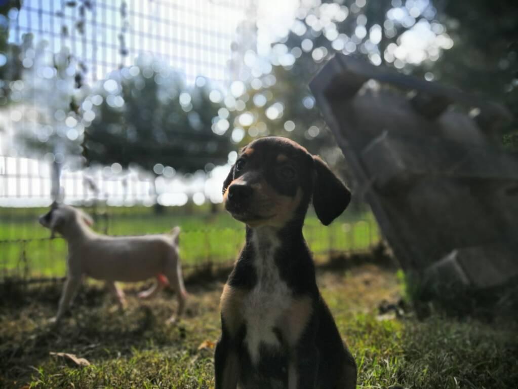 cuccioli sequestrati a solarolo