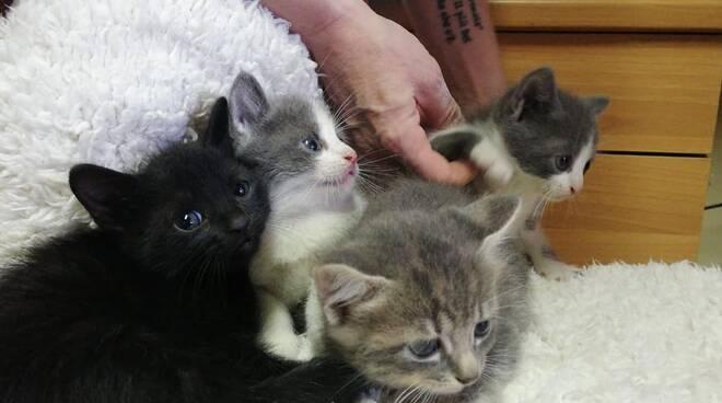 Gattini buttati in uno scatolone e abbandonati a Massa Lombarda