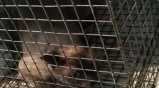 Ravenna, accumulava gatti tenendoli rinchiusi