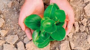 siccità, natura, piante, ambiente