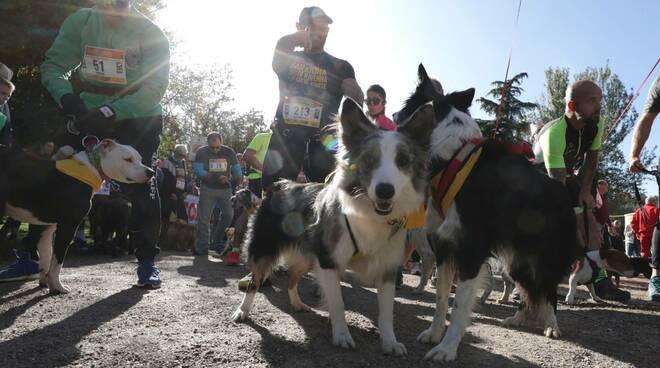 Maratona di Ravenna Città d'arte. In tanti alla  'Conad Family Run' e alla 'Dogs & Run'