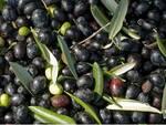 olive-olio