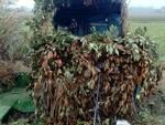 Usa un richiamo vietato: cacciatore denunciato dai Carabinieri Forestali di Rimini