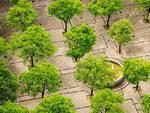 verde città