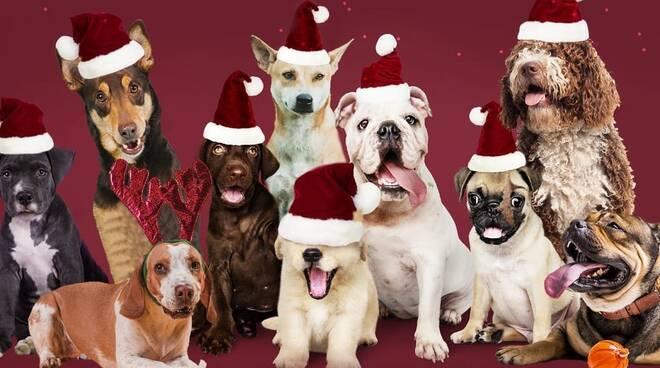 Animali Natale Immagini.Al Canile Di Rimini Arriva Un Natale Lungo Un Mese Rimininotizie Net