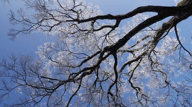 ghiaccio brina meteo