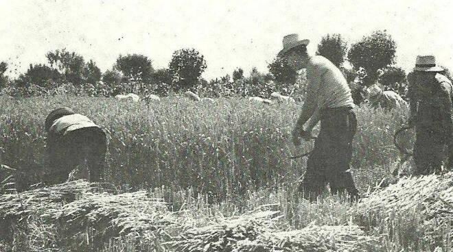 vita contadina romagnola