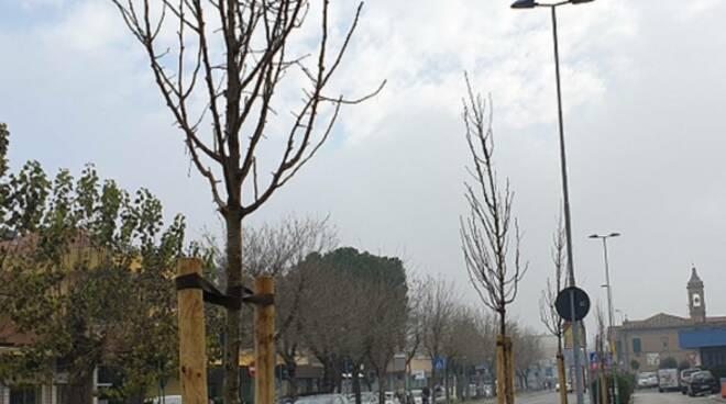 alberi in via Flaminia-Rimini