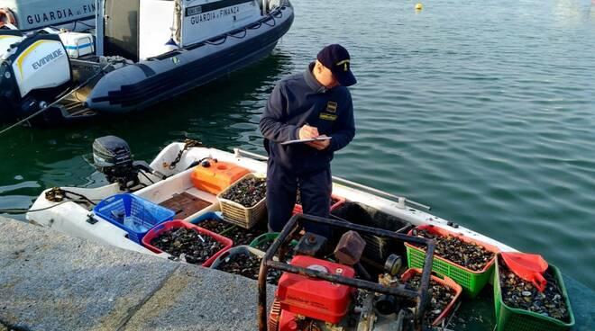 GdF pesca abusiva molluschi - Ravenna