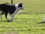 aree di sgambamento cani