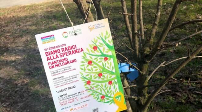 Rimini_Melograno