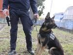 Unità cinofila Polizia Locale di Rimini: nel 2019 400 grammi di stupefacenti fiutati da Jago e Bruce