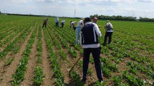 coop cab terra - agricoltura - lavoro agricolo