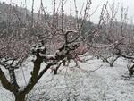 neve sulla colline ravennati - alberi da frutto