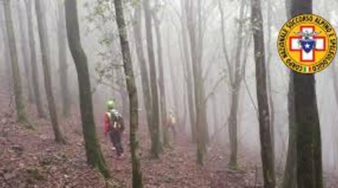 ricerca boschi nebbia