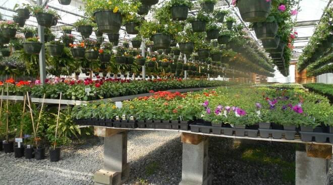 Coronavirus: i fiori si possono vendere